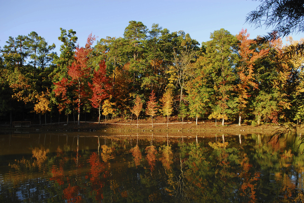 fall-trees-with-a-lake